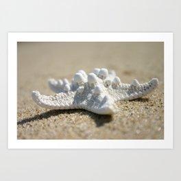 Beach Shell Art Print