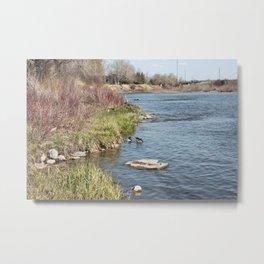 Ducks on the Bow River Metal Print