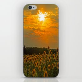 Field of Sunflowers at Sunset iPhone Skin