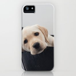 Labrador Puppy iPhone Case
