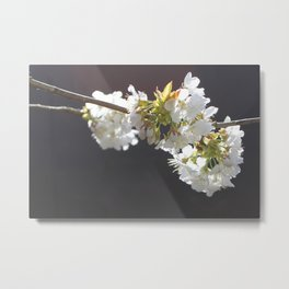 black cherry Metal Print