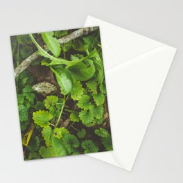 Only Stationery Cards