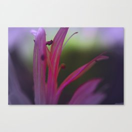 it's getting Stamen in here Canvas Print