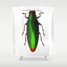 Chrysochroa Fulgidissima Jewel Beetle Shower Curtain