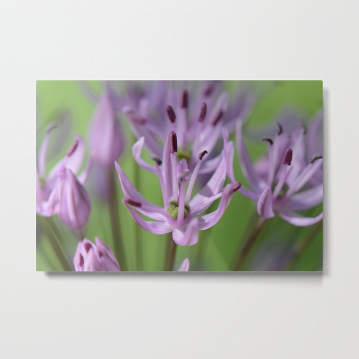 Blossoms in Purple Metal Print