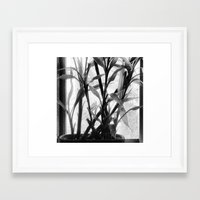 bamboo Framed Art Prints featuring Bamboo by Lindzey42