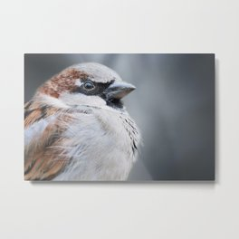 Birds are the only animals with feathers 112 Metal Print