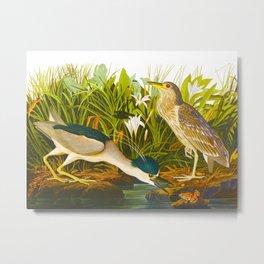 Night Heron, or Qua bird Metal Print