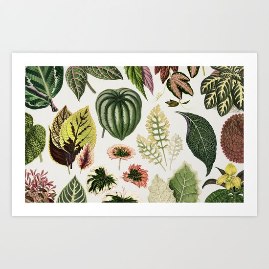 Botanical Print by newburydesigns