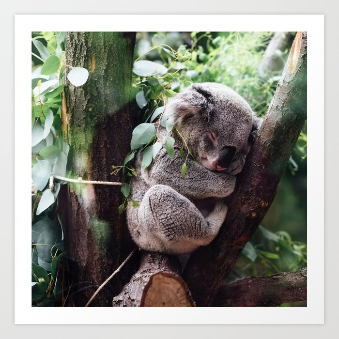 Cute Koala relaxing in a Tree Art Print