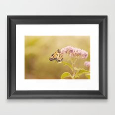 Papillon Framed Art Print