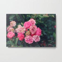 Dying Roses Metal Print
