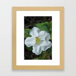 White Tropical Flower Found in Fiji Framed Art Print