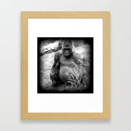Gorilla Black & White Vintage Framed Art Print