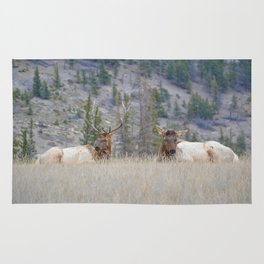 Elk shedding their antlers in Jasper National Park Rug