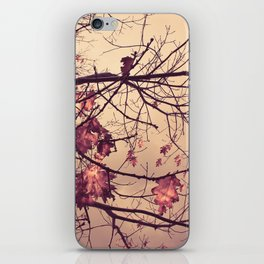 Autumn Falls iPhone Skin