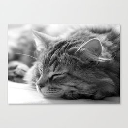 Sleeping cat, cat photography, black & white. Canvas Print