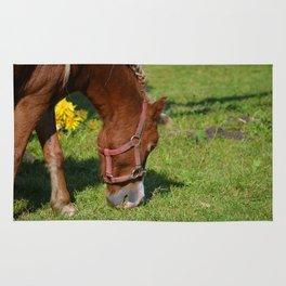 Renaissance Pony - Sorrel Red Rug