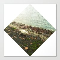westie Canvas Prints featuring Westie Wander by Nina Jankovic