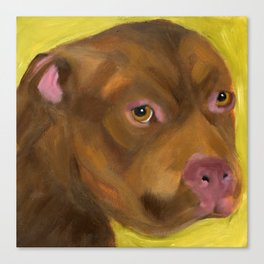 Chocolate Pitbull Canvas Print