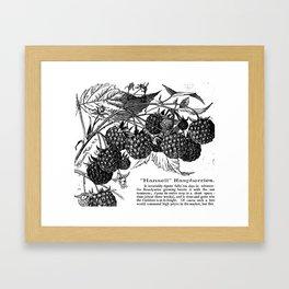 """'Hansell"""" Raspberries 1886 Framed Art Print"""