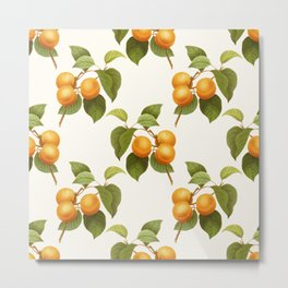 Vintage Apricot Fruit Artwork Metal Print