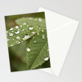 Beautiful Raindrops on leaves  Stationery Cards