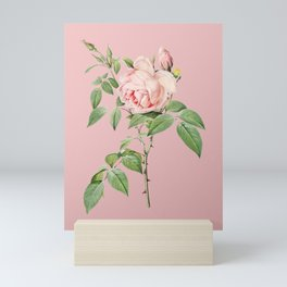 Vintage Blooming Fragrant Rosebush Botanical Illustration on Pink Mini Art Print