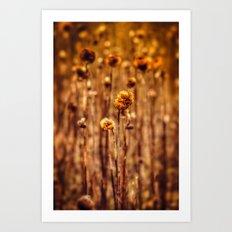Sunflower Heads in the Winter Sun Art Print