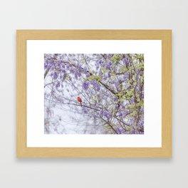 Cardinal and wisteria Framed Art Print
