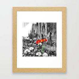 Poppies & Concrete Framed Art Print