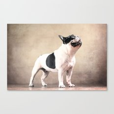 Frech bulldog Canvas Print
