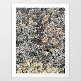 Lichen on the granite rock Art Print
