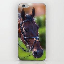 Horse Wall Art, Horse Portrait. Horse looking straight forward closeup. iPhone Skin