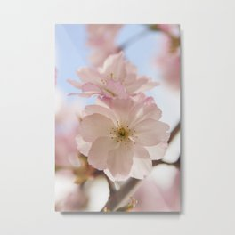 Sping blossom Metal Print