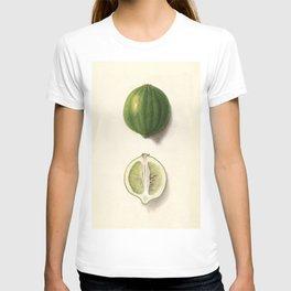 Vintage Illustration of a Lime T-shirt