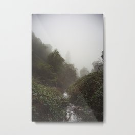 Creek travels through berry vines to disappear in foggy canyon Metal Print