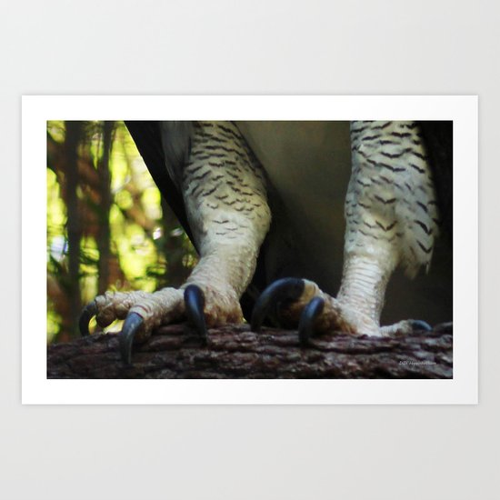 Harpy Toes Art Print