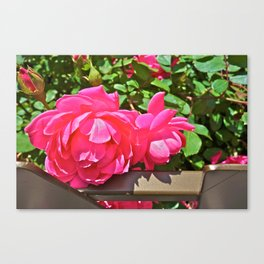 Stopping to smell the roses - Channel Gardens, Rockefeller Center - NYC Canvas Print
