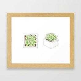 Graptopetalum Framed Art Print