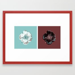 Not a single red rose anywhere! Framed Art Print