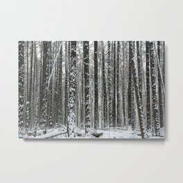 White trees-winter forest Metal Print