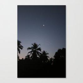 Palm night Canvas Print