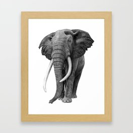 Bull elephant - Drawing in pencil Framed Art Print