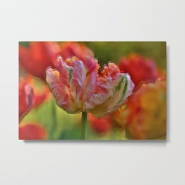 Parrot Tulips of Villa Taranto in Italy in the Wind Metal Print