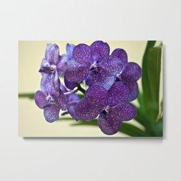 Wanda orchid 8353 Metal Print