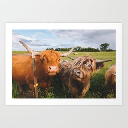 Highland Cows - Blep Art Print