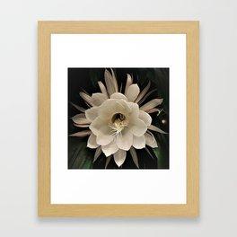 Night Blooming Cereus Framed Art Print