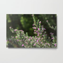 Angled Texas Ranger Branches on Deep Forest Green Metal Print