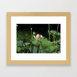 In Delicate Pinks Framed Art Print